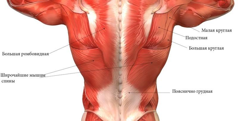 Спазм мышц спины: причины, симптомы, лечение, последствия