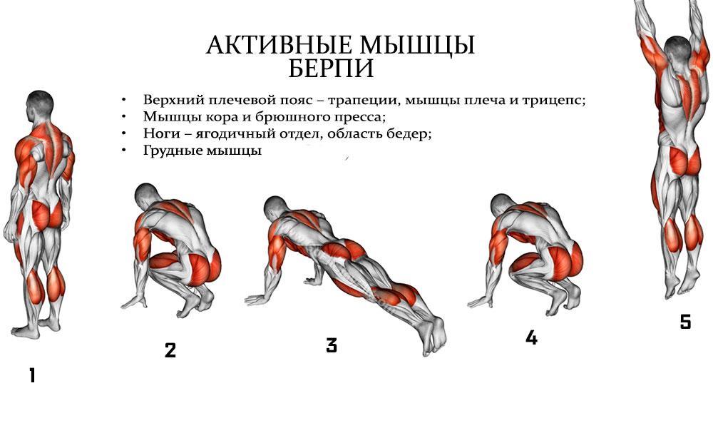 отжимание от пола какие мышцы качаются фото музея