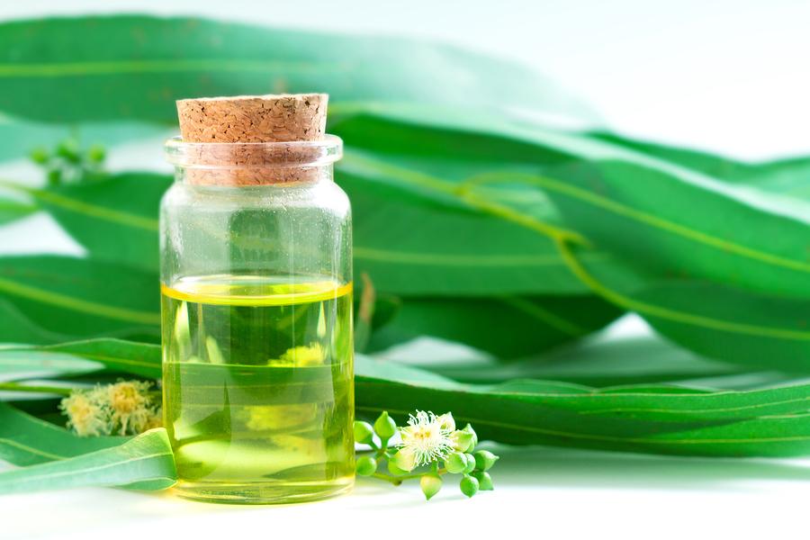 эвкалиптовое эфирное масло применение