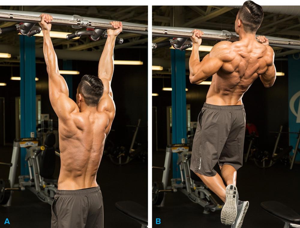 мышцы работают при отжимании от пола