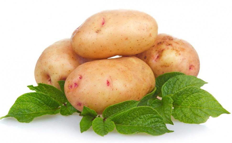 Картофель в Украине: купить картофель на Агробиз