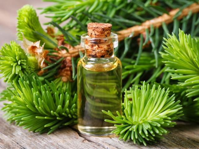 Хвойное масло. Эфирные масла сосны, кедра и ели: свойства и ...
