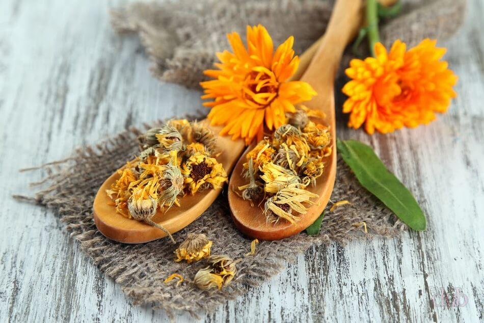 Календула: лечебные свойства для организма | Food and Health